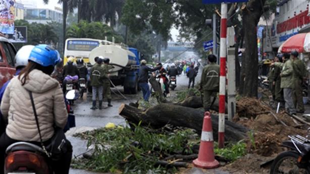 HN chặt cây: Thanh tra chính phủ chính thức vào cuộc