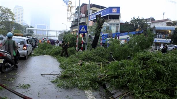 Tp.HCM - Đà Nẵng tận lực bảo vệ cây xanh đô thị