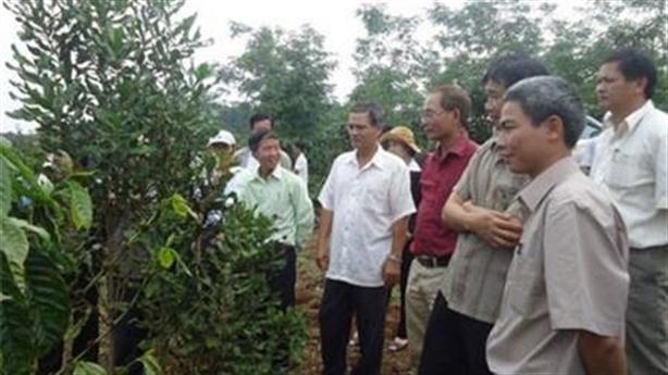 Ban chỉ đạo Tây Nguyên: Không chủ trương cấp tập trồng mắc-ca