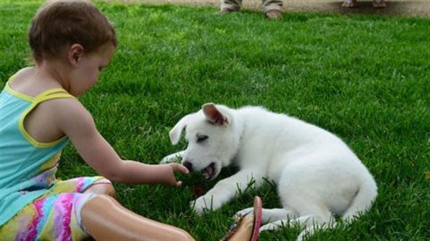 Tình bạn tuyệt vời giữa chú chó và cô bé khuyết chân