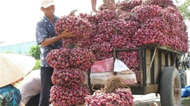Quyết tìm đường ra nông sản: Việc Bộ Công thương cần làm