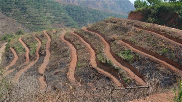 Cao su Tây Bắc: Trung Quốc khắc nghiệt hơn còn trồng được!