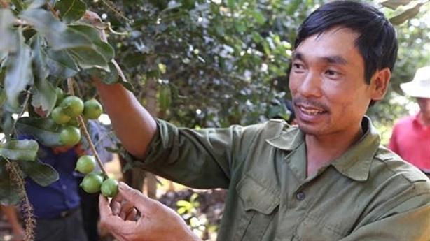 Bộ Nông nghiệp tiếp tục cảnh báo dân về cây mắc ca