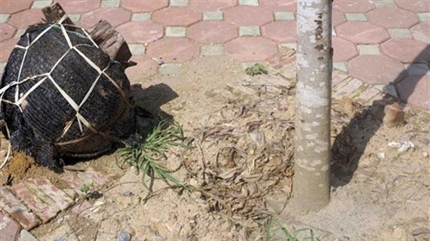 Hà Nội: Lạ như trồng lại cây bị đổ sau giông lốc