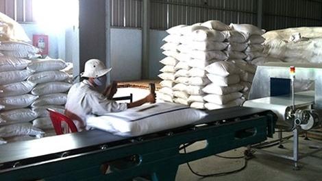Gạo Việt tắc đầu ra vì phụ thuộc Trung Quốc