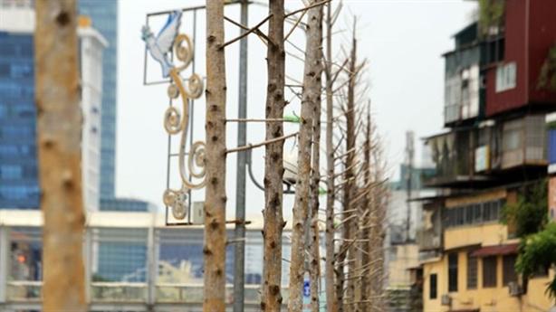 Thay thế cây xanh Hà Nội có phương án mới