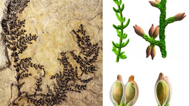Hoa hóa thạch cổ nhất Trái Đất 130 triệu tuổi
