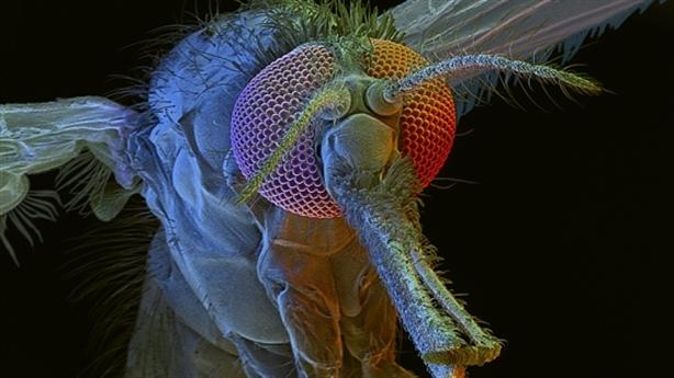 Kỹ thuật gen mới biến côn trùng thành vũ khí sinh học