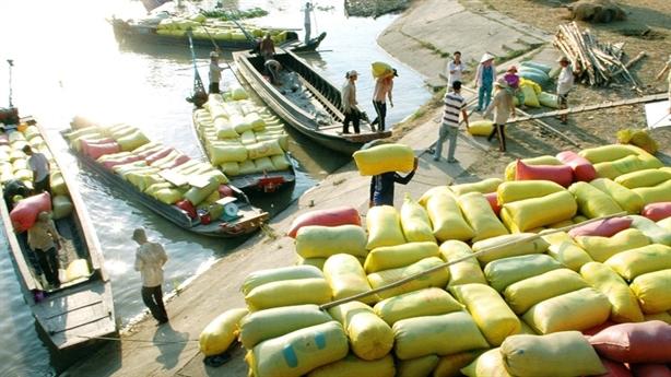 Gạo Việt đi sau Thái Lan 100 năm: Lỗi hai ông lớn?