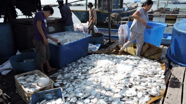 Cá bè chết trắng sông Chà Và: Người dân phải chịu thôi