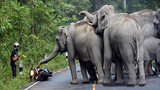 Người đàn ông cúi lạy xin voi tha mạng