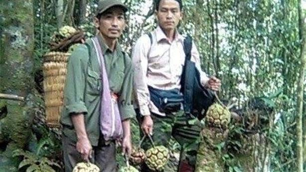 Na rừng Sơn La 5 kg/quả, giá cực đắt