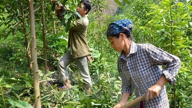 Thủ tướng trả lời chất vấn về chồng lấn đất nông-lâm nghiệp