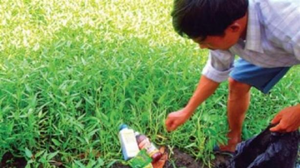 Trưởng đại diện JICA mơ an tâm ăn rau Việt