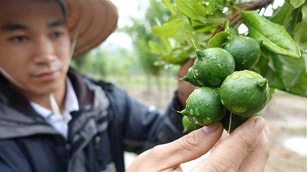 Việt Nam chưa tỉnh giấc mơ mắc-ca: Hậu quả sẽ nặng nề