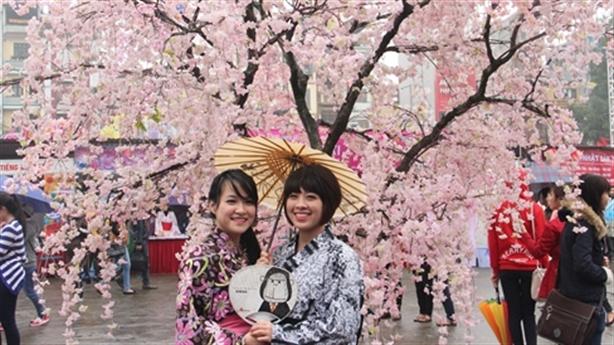Hoa anh đào Nhật tặng riêng doanh nghiệp: Đà Nẵng trần tình