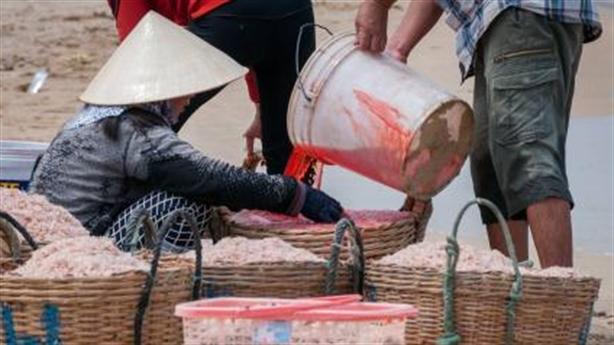 Nhuộm đỏ ruốc bằng hóa chất: Ngư dân làm không ăn