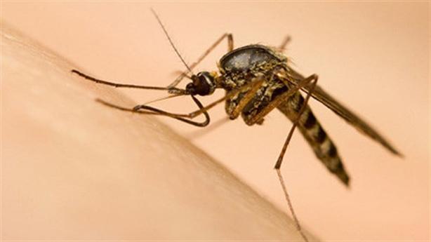 Việt Nam nuôi được muỗi phòng Zika?