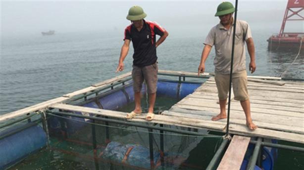 Dân biển Vũng Áng kêu trời vì cá chết hàng loạt