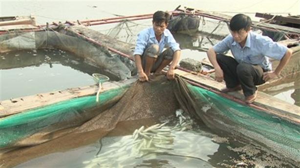 Cá chết ngập Vũng Áng: Không chết do dịch, tại ô nhiễm?