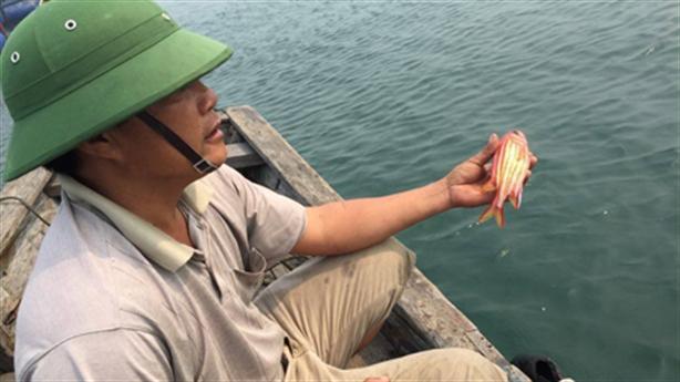 Cá chết ở Vũng Áng: Đại diện Formosa nói gì?