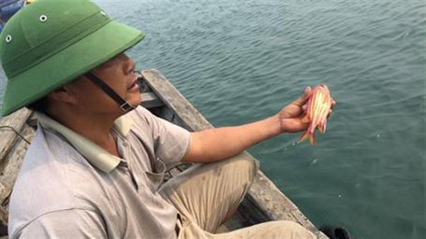Cá chết ở Vũng Áng không do ô nhiễm:Lại tại ông trời?