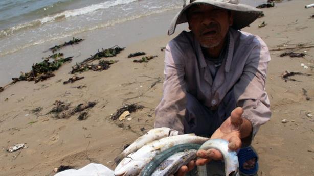Cá biển chết dọc biển miền Trung: Có tác nhân Trung Quốc?