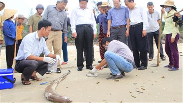 Cá chết hàng loạt ở Vũng Áng: Không vào được Formosa