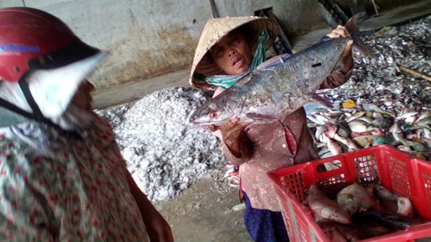 Cá chết dọc biển miền Trung: Trung Quốc phá rạn san hô