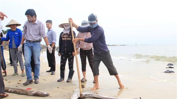 Cá chết hàng loạt ở Vũng Áng: Chắc chắn kiểm tra Formosa