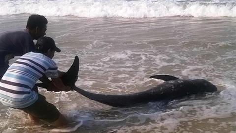 Thợ lặn Formosa tử vong: Gửi mẫu ra Hà Nội giám định