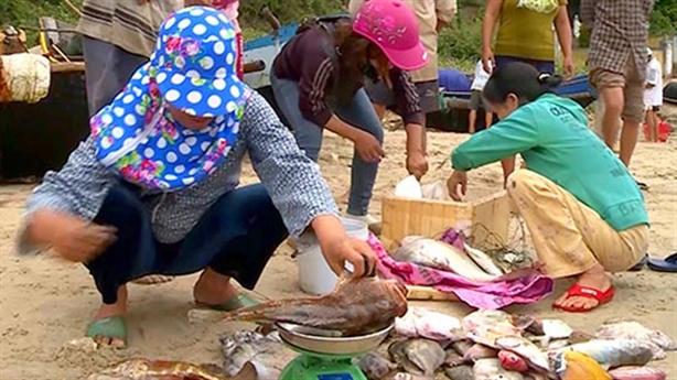 Chuyên gia nước ngoài tìm nguyên nhân cá chết: Câu hỏi nhỏ