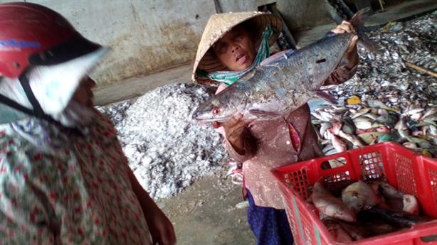 Cá chết hàng loạt ở miền Trung:Đừng để chìm xuống trách nhiệm