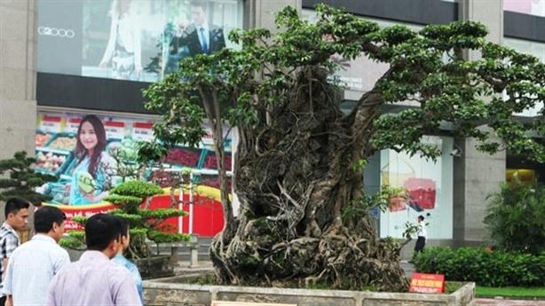 Những siêu cây triển lãm ở Hà Nội