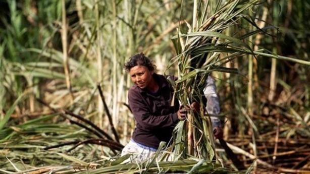 Công ty bầu Đức lại xin cơ chế nhập đường từ Lào