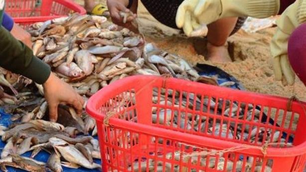 Chuyên gia quốc tế tìm nguyên nhân cá chết: Chỉ hợp tác