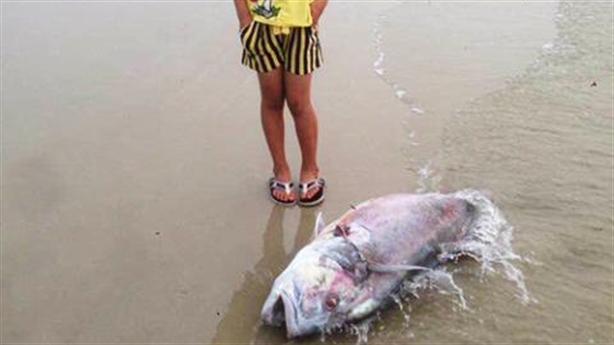 Cá chết ở miền Trung: Công bố nguyên nhân trong tháng 6
