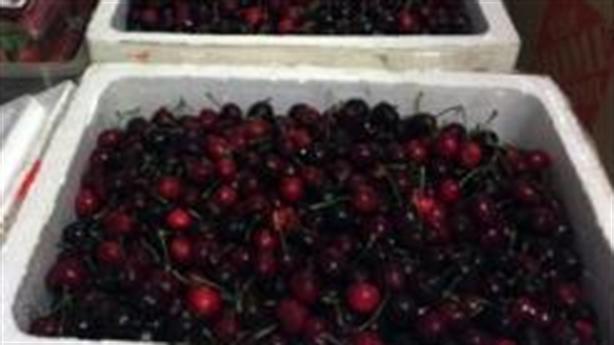 Vụ móc trộm cherry: Cảng vụ khẳng định quy trình minh bạch