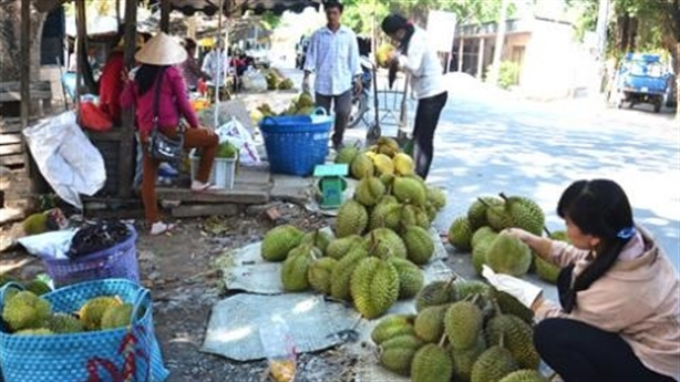 Trung Quốc dùng chiêu hạ chuối Philippines cho sầu riêng Việt Nam