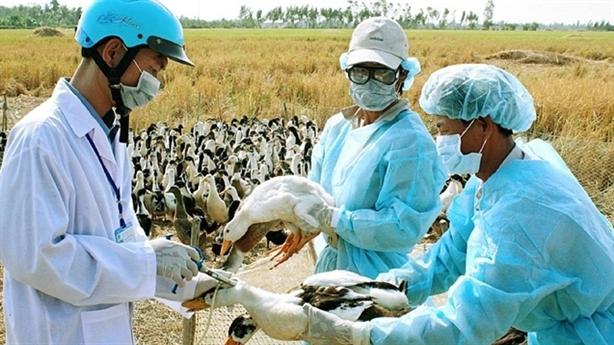 Tồn dư kháng sinh vật nuôi và nguy cơ kháng kháng sinh