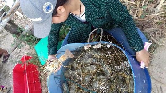 Tôm hùm, cá chết hàng loạt ở Phú Yên: Do nắng nóng
