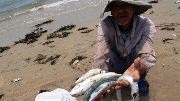 Hà Tĩnh đề nghị sớm công bố nguyên nhân cá chết