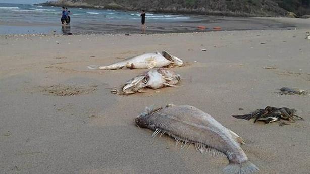 Công bố nguyên nhân cá chết: Formosa