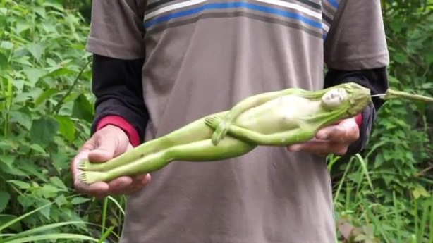 Bằng chứng trái cây hình thiếu nữ khỏa thân ở Thái Lan