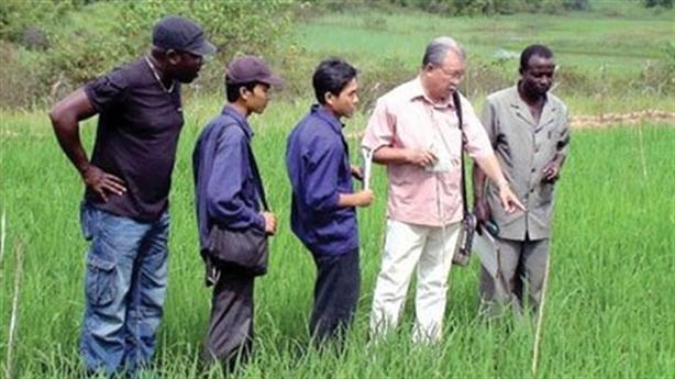 Gạo Việt Nam thua đau Myanmar: Dự báo sắp thành thật