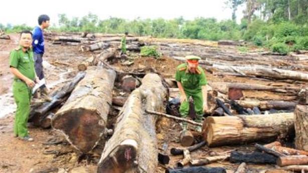 Rừng nghèo kiệt có gỗ quý:Không loại trừ đũa thần hô biến