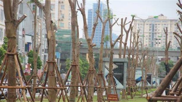 Hà Nội đang học cách trồng cây xanh của Trung Quốc