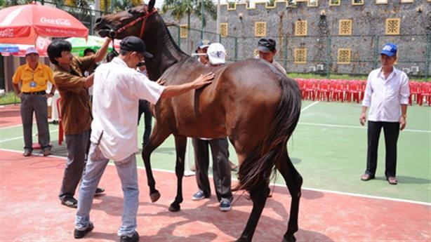 Dũng 'lò vôi' mở trường đua ngựa nghìn tỷ: Chờ Trung ương