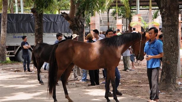 Dũng 'lò vôi' xây trường đua ngựa: Khẳng định không cá cược
