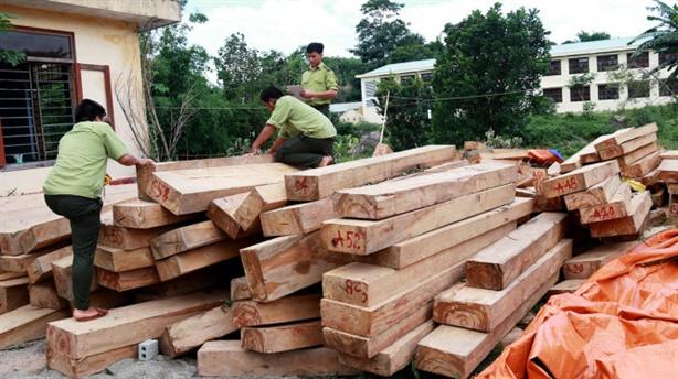 Quảng Nam tiếp tục phát hiện gỗ pơmu gần cửa khẩu